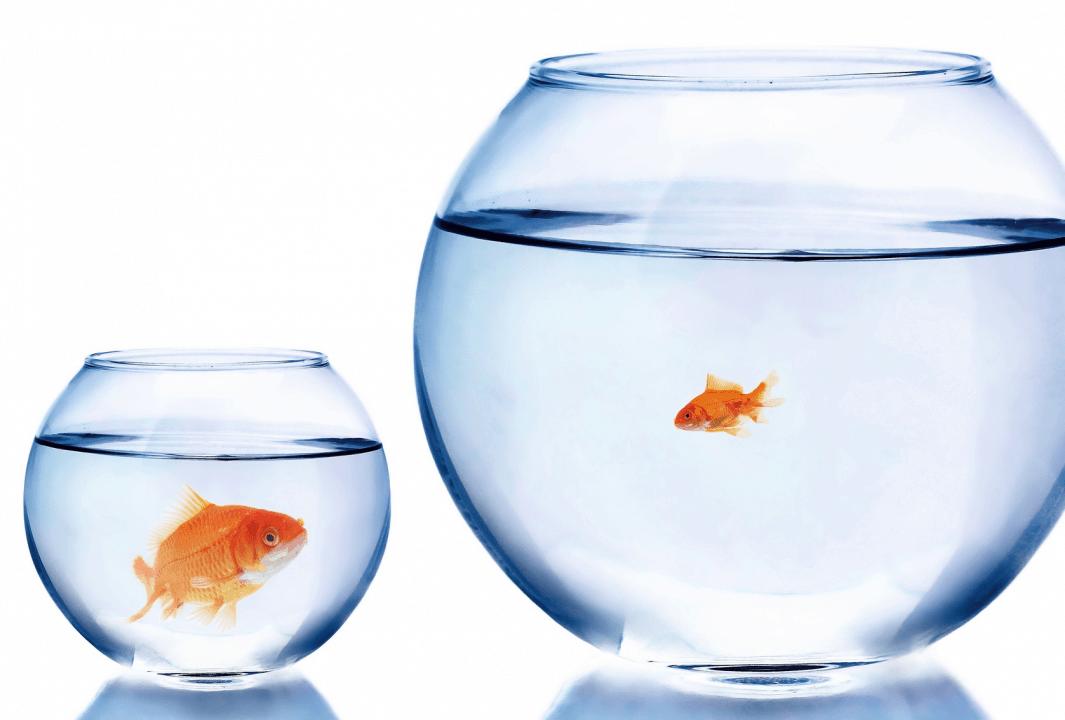 Sommes-nous solubles dans la comparaison comparaison Maudite comparaison ! poissons e1509816789442
