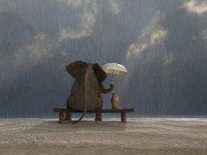 éléphantes et handicaps, ubuntu