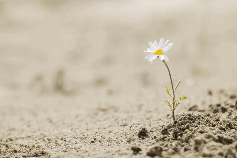 3 repères de résilience pour surmonter les crises