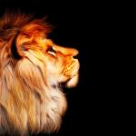Pratiques d'intervention sociale: élevé par les lions