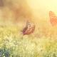 Pâques dans un jardin détruit